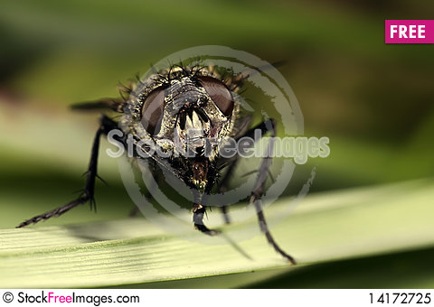 Free The Fly Royalty Free Stock Photo - 14172725