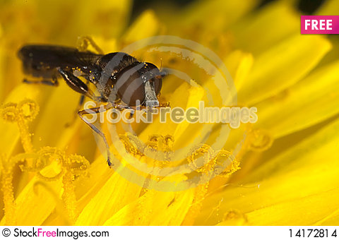 Free On Yellow... Stock Images - 14172814