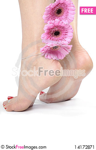 Free Woman Legs And Feet Isolated Over White Background Stock Image - 14172871