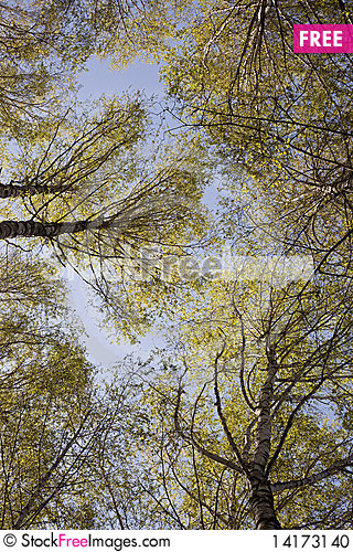 Free Tree Branches In The Sky Stock Photo - 14173140