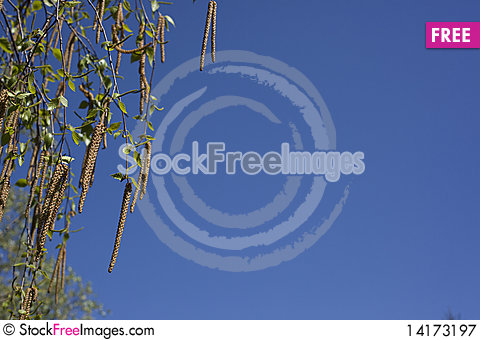 Free Tree Leafs Royalty Free Stock Photography - 14173197