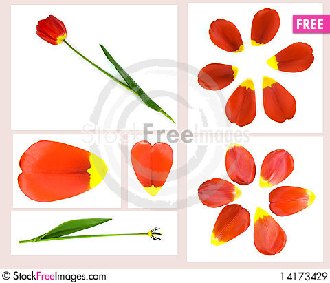 Free Collage From Tulips Royalty Free Stock Images - 14173429