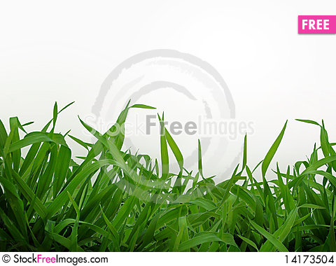 Free Grass Stock Images - 14173504