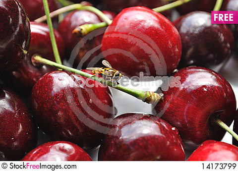 Free Cherries Closeup Royalty Free Stock Images - 14173799
