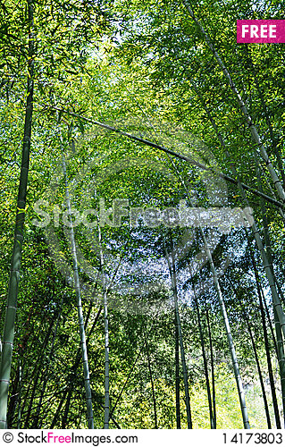 Free Bamboo Forest Stock Photos - 14173803