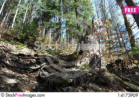 Free The Mixed Forest Is In Mountains Royalty Free Stock Images - 14173909