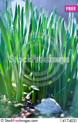 Free Young Green Of Spring Grass Stock Image - 14174031