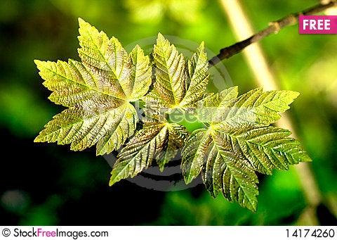 Free Spring Stock Photo - 14174260