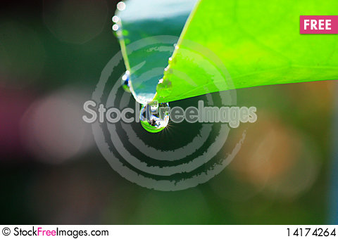 Free Water Drop Stock Images - 14174264
