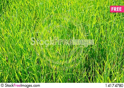Free Green Grass Field Background Stock Photo - 14174780