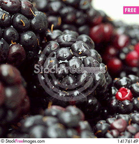 Free Ripe Lush Blackberry Forest Royalty Free Stock Images - 14176149