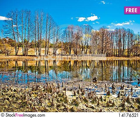 Free Bog Stock Image - 14176521