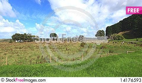 Free Australian Meadow Stock Photos - 14176593