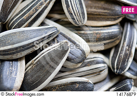 Free Sunflower Seeds Royalty Free Stock Images - 14176879