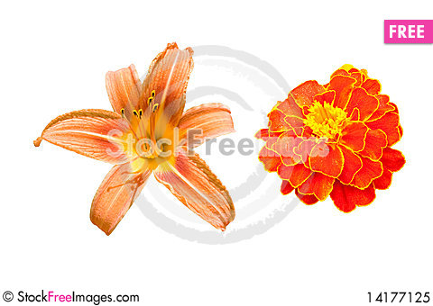 Free Red Flowers On The White Royalty Free Stock Photo - 14177125