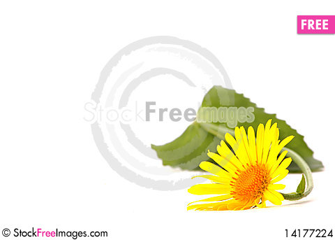 Free Beautiful Yellow Flower Stock Images - 14177224
