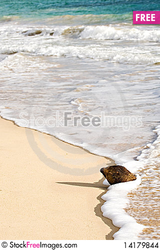 Free Coconut In The Foam Of The Waves On A Beach Stock Images - 14179844