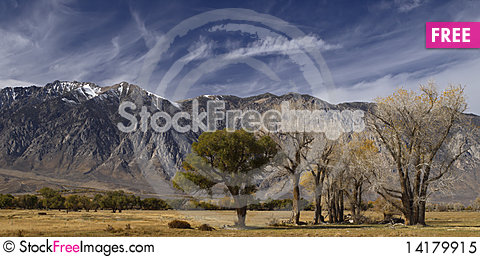 Free Lone Trees Against The Californian Sierra Nevada. Royalty Free Stock Photo - 14179915