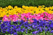 Free Flowerbed Royalty Free Stock Photography - 14172157