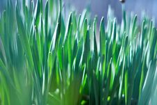 Young Green Of Spring Grass Stock Images