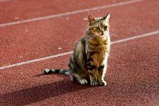 Free Beautiful Cat Stock Photography - 14175432