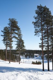 Free Winter Landscape Royalty Free Stock Images - 14175939