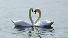 Free Love Stock Photo - 14176270