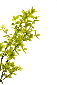 Free Green Leaves Stock Photos - 14176653