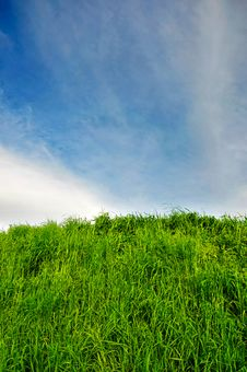 Free Blue Sky With Grass Stock Photos - 14176783