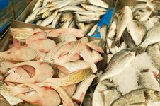 Fresh Fish For Sale Stock Images