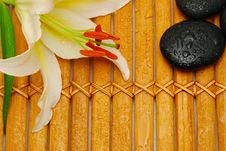 Free White Lily On Bamboo Royalty Free Stock Photos - 14178948