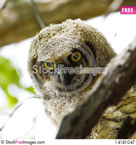 Free Whooos There Royalty Free Stock Photography - 14181047