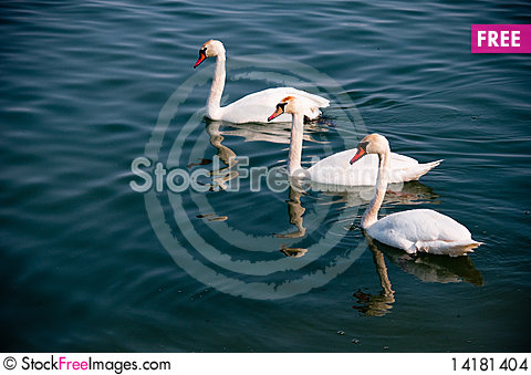 Free A Swan Stock Images - 14181404