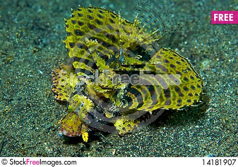 Free Fire Fish In Manado, Indonesia Royalty Free Stock Photography - 14181907
