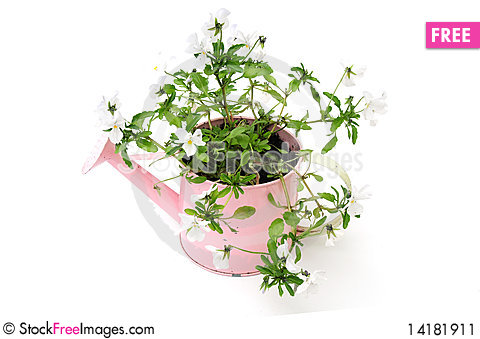Free Pretty Plant In Watering Can Stock Image - 14181911