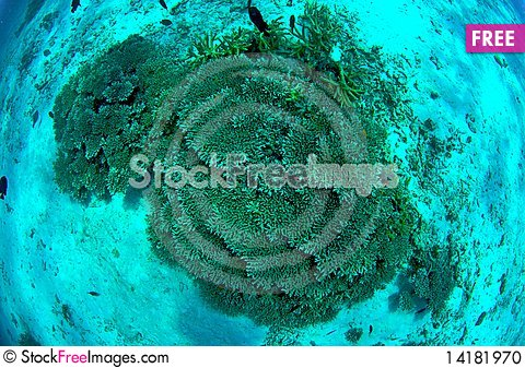 Free Coral Reef Stock Photo - 14181970