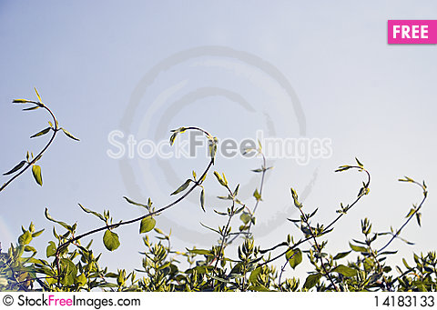 Free Green Plant Curling Stock Photos - 14183133