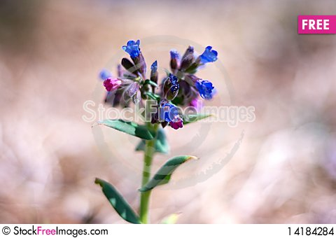 Free Spring Young Blue Flowers Stock Images - 14184284