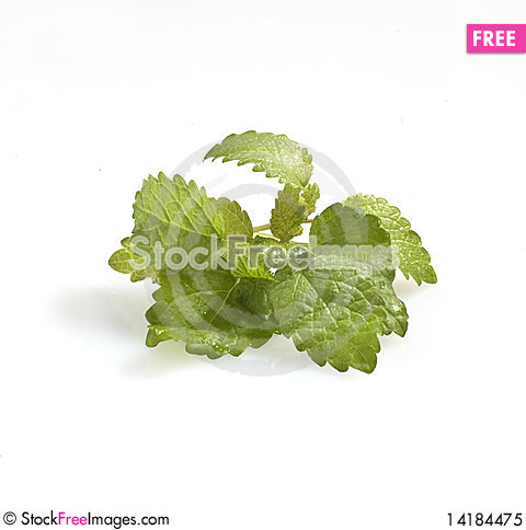 Free Mint Royalty Free Stock Photo - 14184475
