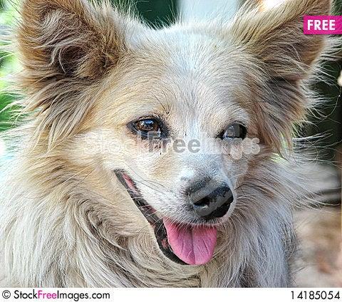 Free House Dog Stock Images - 14185054