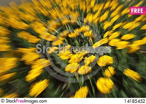 Free Tulips Stock Photography - 14185452