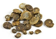 Free Ammonite Fossil Stock Photos - 14180543