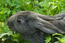 Free Rabbit Stock Photos - 14181063
