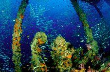 Free King Cruiser Wreck Stock Photo - 14181930