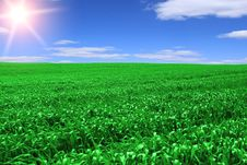 Free Green Field Stock Images - 14182384