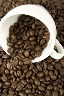 Free Coffee Royalty Free Stock Image - 14183726