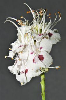 Free A Flower Macro Stock Photos - 14184593
