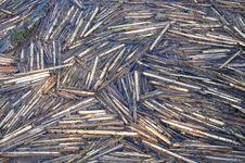 Reed Stock Photo