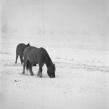 Free Horse Stock Photos - 14188133