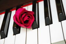 Free Closeup Of Rose On Piano Keyboard Royalty Free Stock Image - 14188146